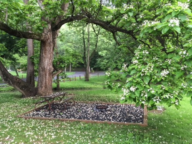 Beautiful tree view at Walnut Hills campground site