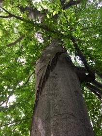 Another awe inspiring tree