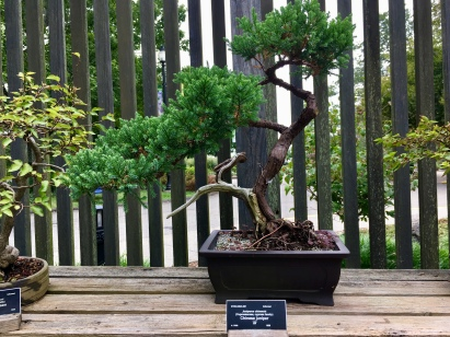 Bonsai tree started in 1969