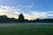 Wooded meadow with mist during a morning walk